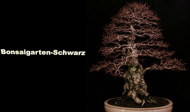 Bonsaigarten Schwarz-Logo